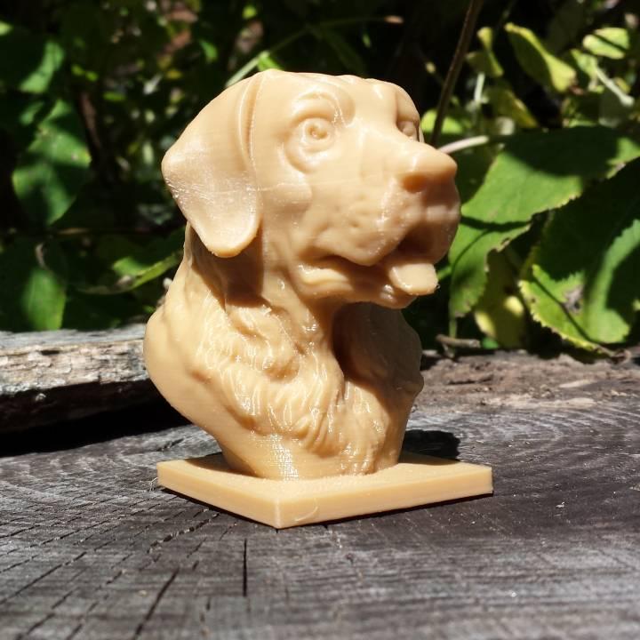 Labrador Bust