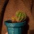 LiLoFlo (Little Lowpoly Flowerpot) print image