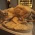 Tiger devouring a young deer at The Musée des Beaux-Arts, Lyon image