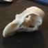 Eagle (Osprey) Skull print image