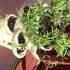 Herb Garden Barrel image