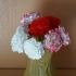 Carnation Flower Blossom Top print image