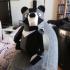 Formosan Black Bear print image
