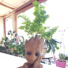 "Picture of print of Baby Groot flower pot: ""Gardens"" of the Galaxy 2 This print has been uploaded by jojo neil"