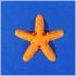 Florida Star-fish Refrigerator Magnet image