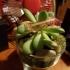 Sunglasses for plants image