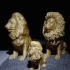Hairy Lion image