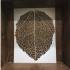 Aspen Leaf image