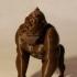 Happy Gorilla image