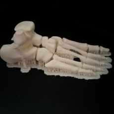 Anatomical Model_Foot