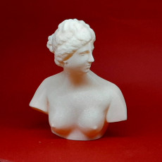 Picture of print of Bust of the Medici Venus This print has been uploaded by Frank Li
