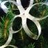 Christmas Tree Star Decoration image