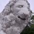 Medici Lion image