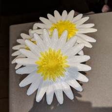 Picture of print of Daisy - Flat flower