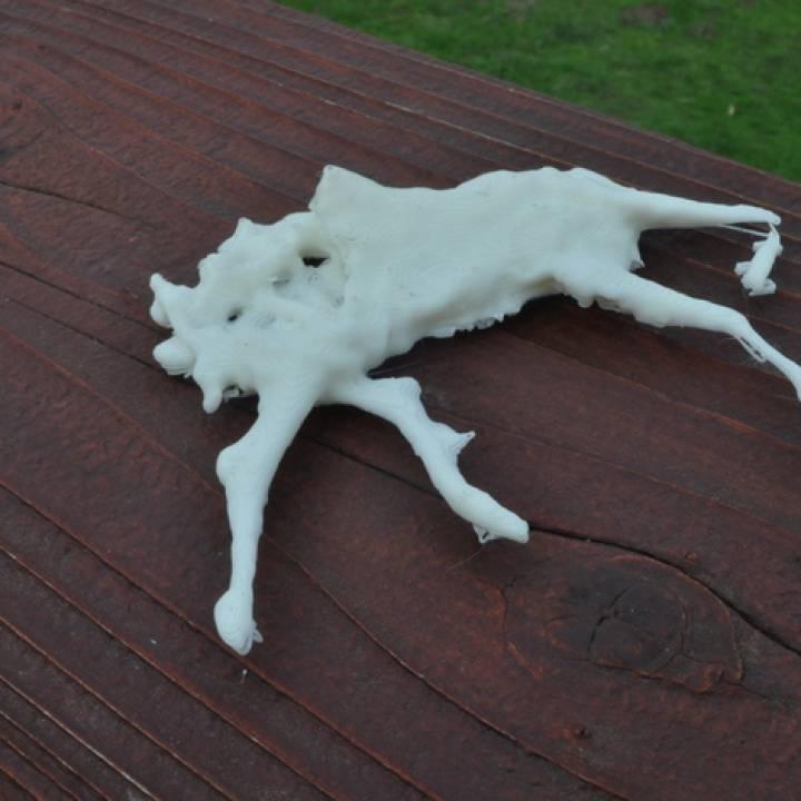 Roadkill Deer