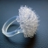 Ring dandelion image