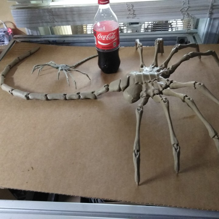 Picture of print of Agisis Ultimate Alien Face Hugger (40in x 23in - LIFE SIZE!) This print has been uploaded by Matt Weber