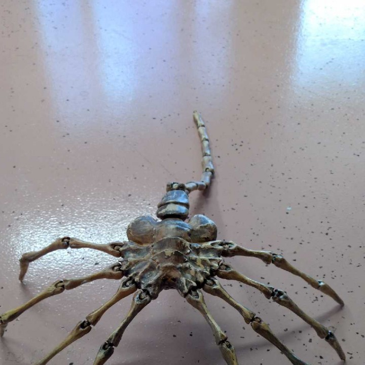 Picture of print of Agisis Ultimate Alien Face Hugger (40in x 23in - LIFE SIZE!) This print has been uploaded by David Bevans