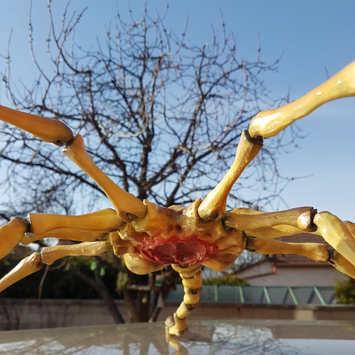 Picture of print of Agisis Ultimate Alien Face Hugger (40in x 23in - LIFE SIZE!) This print has been uploaded by Vladimir Strycek