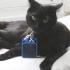 Mokacat - Mokacam Cat Adapter image