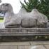 SAAM Gaurdian Camel image