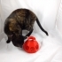 Cat Pod Feeder image