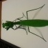 Lady Mantis enjoying aftercourse image