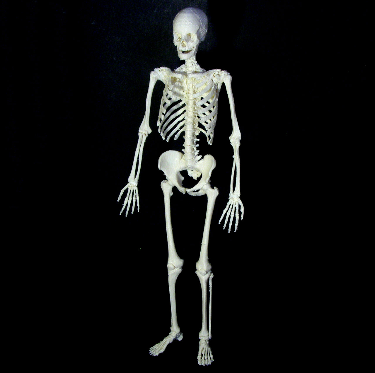 3d printable human skeleton by dario baldi
