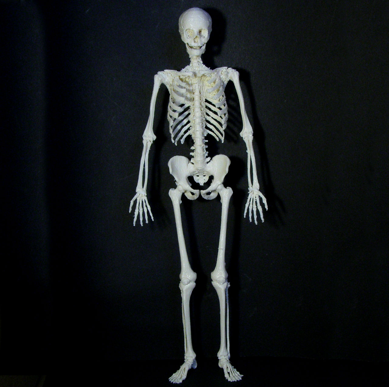 This is a picture of Unusual Printable Human Skeleton
