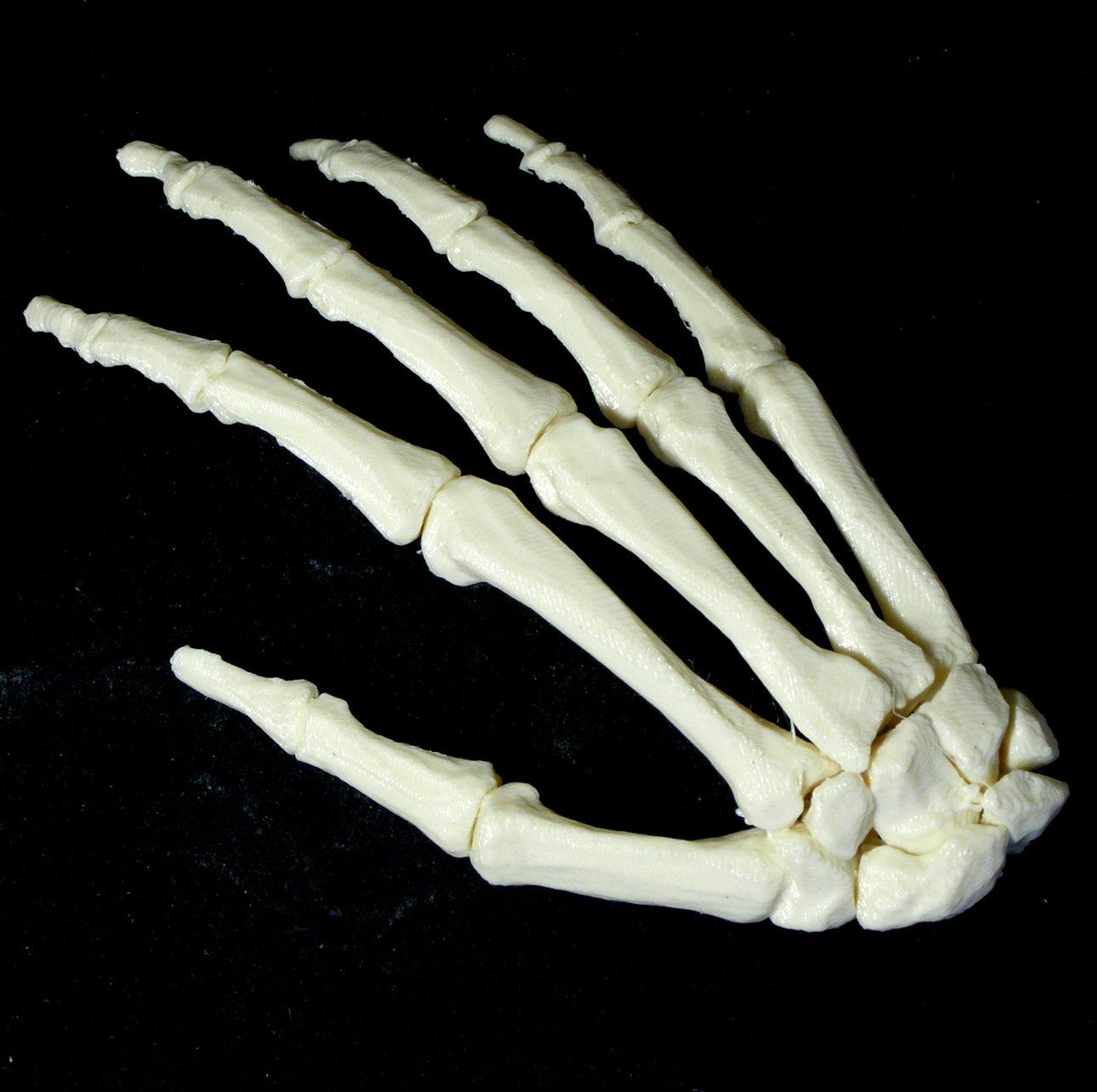 Bone - Hand - Right image