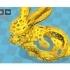 Art bunny image