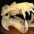 Hippopotamus Skull image