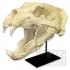Ursus Maritimus, Polar Bear image