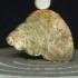 Pleurotomaria thomsoni Tate image