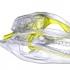 Crocodile Brain image