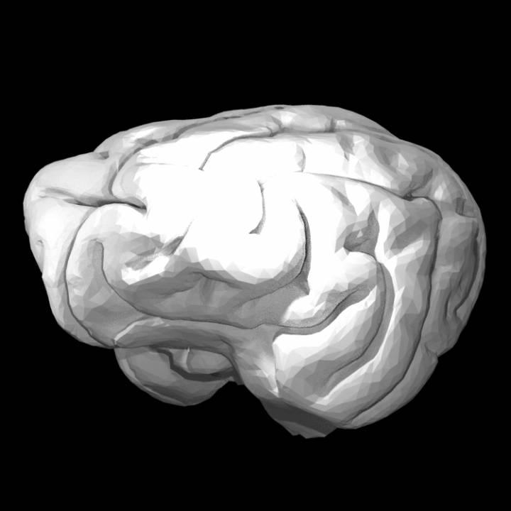 Cheetah Brain