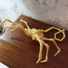 Picture of print of Alien Facehugger