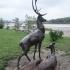 Deers image