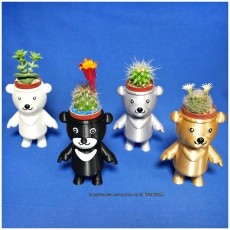 BEAR BRAVO Potted plants