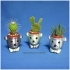 BEAR BRAVO Potted plants image