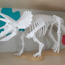 Picture of print of Triceratops prorsus Skeleton
