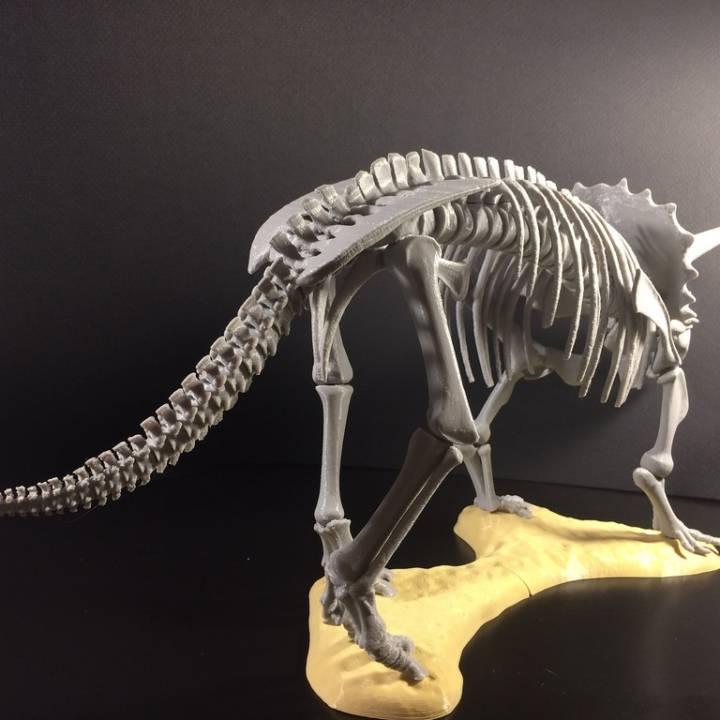 Triceratops prorsus Skeleton