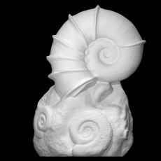 A  Winged  Ammonite