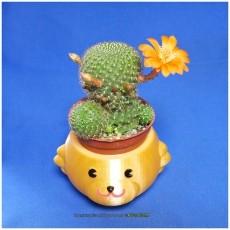 Mugs bear potted plants