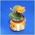 Mugs bear potted plants image