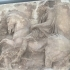 Parthenon Frieze _ W IX,16-17 image