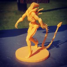 Picture of print of Xenomorph (Alien)