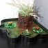 Flower Pot-Froggy pond image