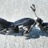 Custom Motorbike image