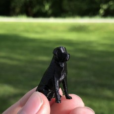 Picture of print of Low Poly Dog - Beto This print has been uploaded by David Roth